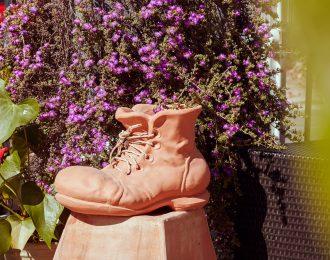 Shoe-Plant