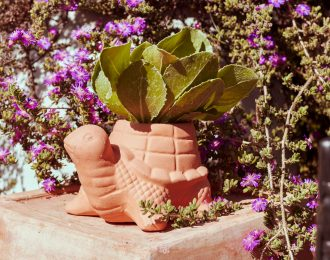 Turtle-Plant